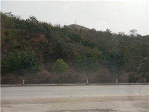 汽车陪练、上路行驶~侧方位停车~倒车入库