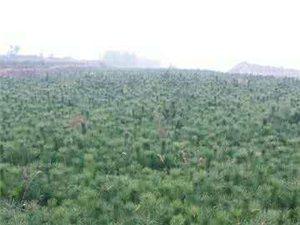 绿化苗木,保护环境
