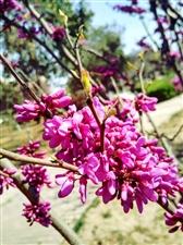 清明时节雨纷纷,万紫千红又逢春,各位老师铭祖志,挥毫赋诗祭英魂。