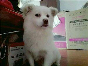 我家狗狗丢了,叫多多,是前段时间爸爸在东青住院,它跑来跑去的跑丢了,到现在没有回来��