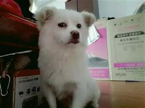 我家狗狗丢了,叫多多,是前段时间爸爸在东青住院,它跑来跑去的跑丢了,到现在没有回来