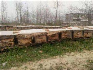 �H��大家好我是佛�w寺的大家有需要蜂蜜的�]有自家�B的蜜蜂《新蜜》都是�峰如果不�不
