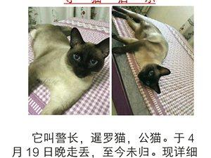 寻暹罗猫,很着急,好心人帮扩一下,谢谢?