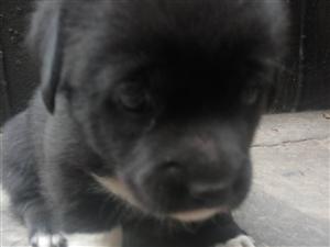 滿月小狗找領養