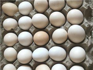 散養土雞蛋求購