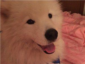 求求大家帮我找找人在外地爱狗走失。