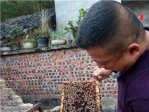 自己養的正宗土蜂蜜