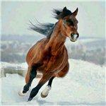 驰骋的骏马