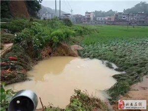 蒲塘化寿洪水