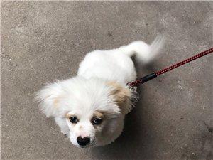 出售4个月狗狗