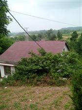 美丽的家乡总是那么亲切!迷人的田园风景散发着它淡淡的自然的清纯!