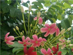 路边的花儿好艳丽