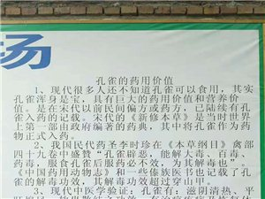 龍南兄弟特種孔雀養殖基地
