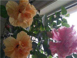 盆花电话13147976048(微信同号)