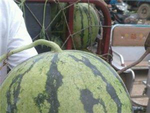 西瓜购销大市场