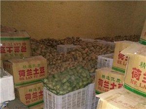 荷兰十五土豆,土豆粉