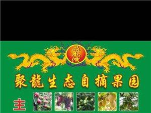鼎龙生态种植自摘果园