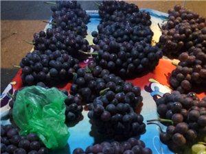 葡萄种植及销售