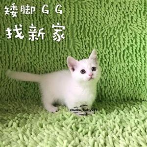 出售自家养的各类名猫