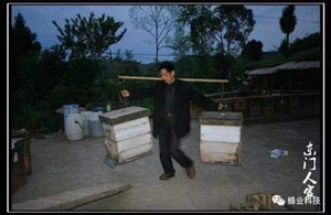 肩挑蜜蜂舒豪情
