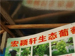 桃江宏穎軒葡萄種植果園歡迎您位臨!