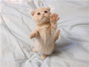 我想请问,谁有不要的小猫仔吗,我想养一个