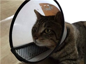 尋貓啟事,求助!