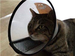 尋貓啟事,求助