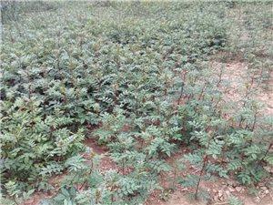 个人苗木种植