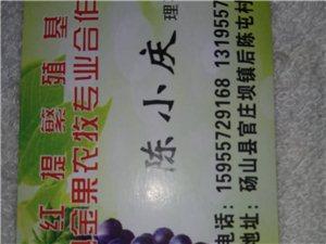 陽光玫瑰葡萄發北京市場