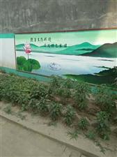 我的家乡十里铺镇史庄村