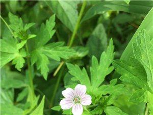 路边的小野花也有美的一面