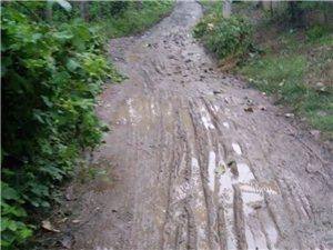 看看我们村的水泥路,有什么感想?