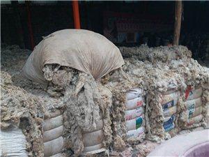 新疆原毛出售