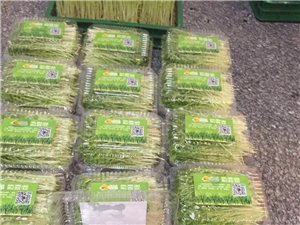 绿色有机芽苗菜