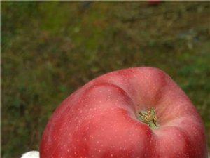好苹果在哪里?