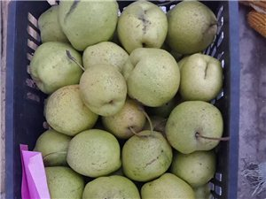 出售王村雪花梨酥梨