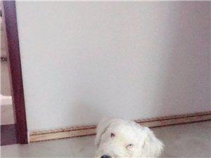 我的狗狗走失了、請好心人見到還給我