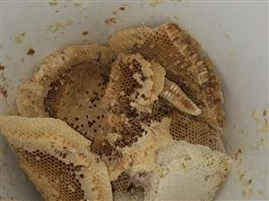 蜜蜂糖出售。假一赔十,有需要的朋友请联系我
