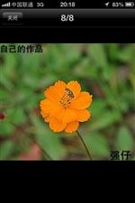 大美澳门龙虎斗网站