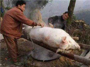 快要过年了,你们杀猪的时候喊我来收猪毛哈