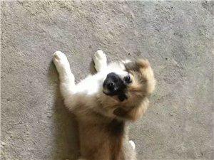 寻找,狗狗