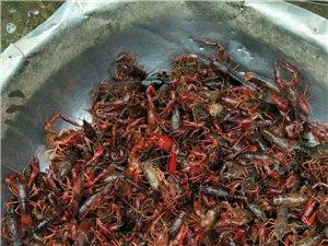 朋友们,海龙王虾蟹场,垂钓龙虾,棋牌生活,周末的好时光,美味佳肴,特色菜品,舌尖上的味道,欢迎你的到