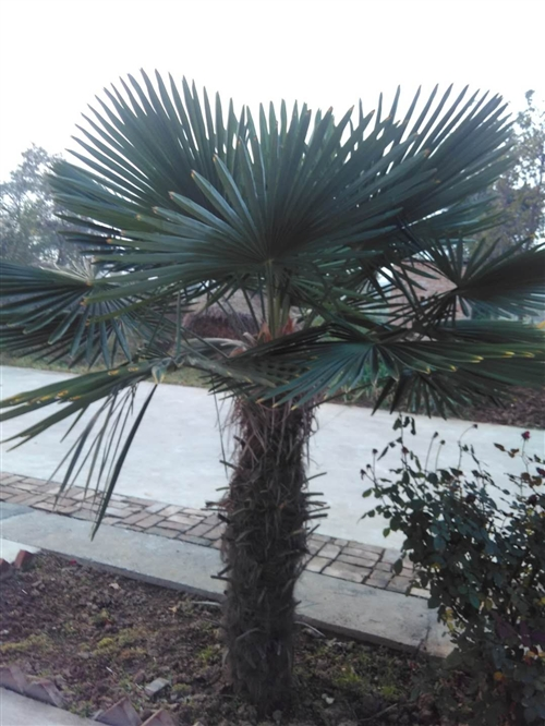 门外有一风景棕树影响电线现出售价格面仪。