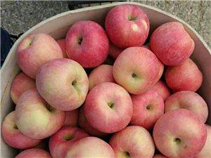 卖栖霞苹果