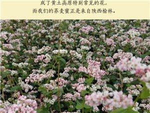 純天然蕎麥蜂蜜~可微信18236285514