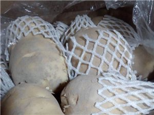 土豆出库,价格美丽。