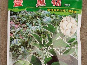 批发西瓜砧木种子