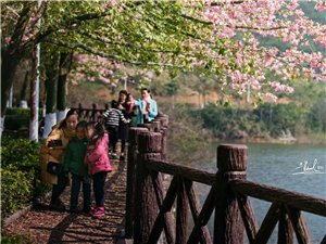 木棉花开――兴业东龙森林公园