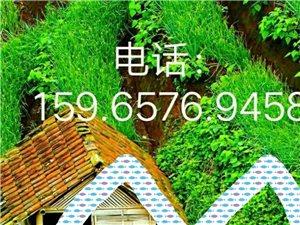 买一辆蓝牌 货车,要3米多或4.2米的。有的打电话159.6576.9458
